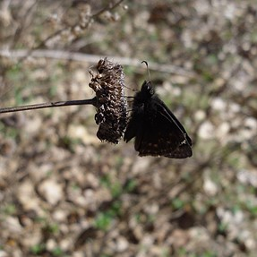 A Gothic Butterfly