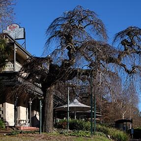 Great Old Tree - Spooky