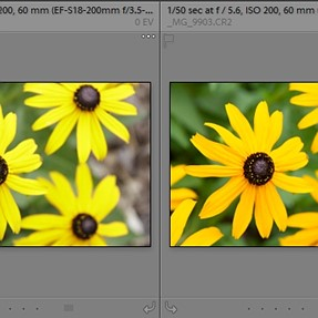 Why is Lightroom adding a color cast?!?