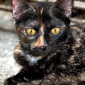 :-)) Sunday Cat! #509 July 16, 2017 ((-: