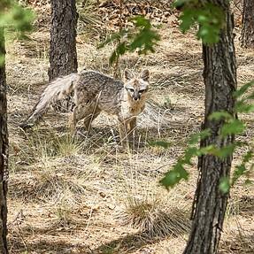 NEX-7 still alive - wildlife shots