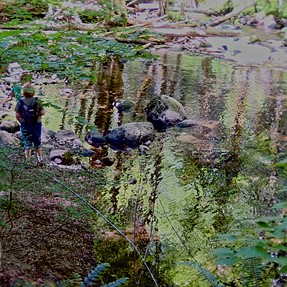 French Impressionism in Gifford Pinchot National Forest