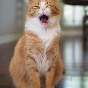 :-)) Sunday Cat! #523 October 22, 2017 ((-:
