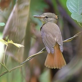 Birds Peperpot