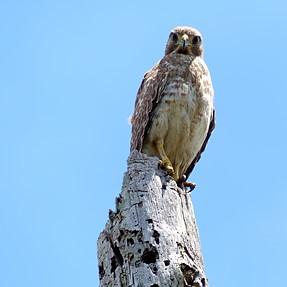 Hawk ID help