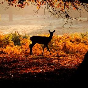 Hide and seek with deers in Richmond Park