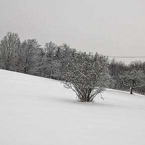 Hmmm...Snow again!