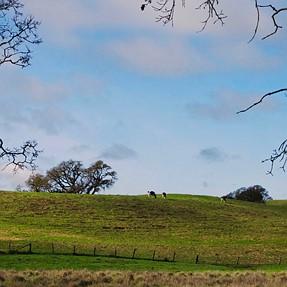 x30 Landscape