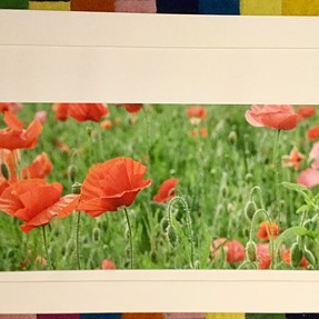 Epson surecolor P800 - trouble printing on custom size papers