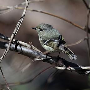 Bird ID needed