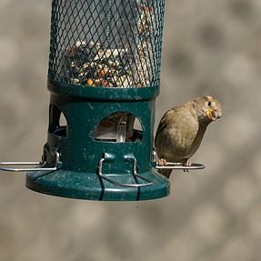 Bird identity Please