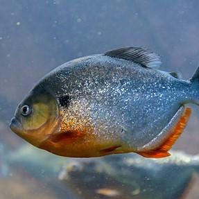 Latest pictures from Aquarium