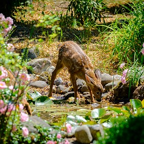 Flora & Fauna in my Ponda (and WURMZ!!!!)