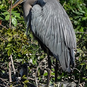 GBH with the RX10 IV