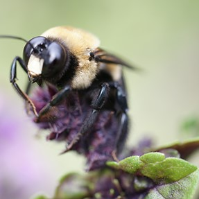A resting bee came back to life