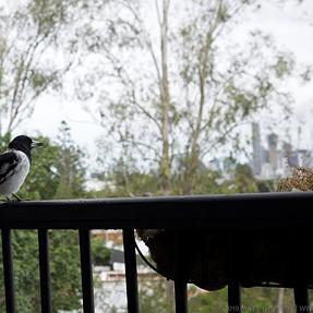 Bird with Nikon 14-24