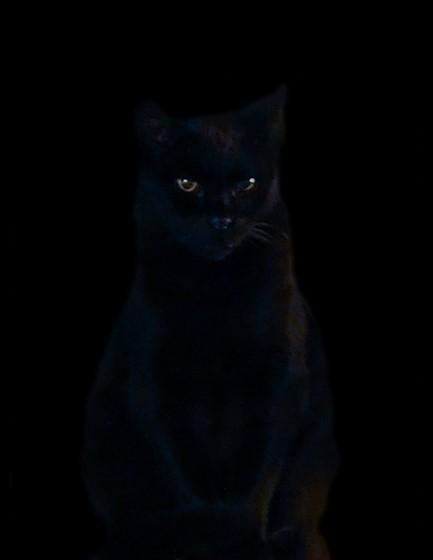 Night Cat Productions: Black Cat At Night...: Retouching Forum: Digital