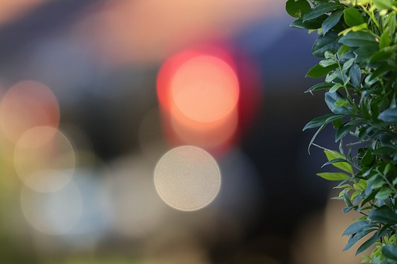 EF Lenses on the M- bokeh examples #2 (PICS): Canon EOS M
