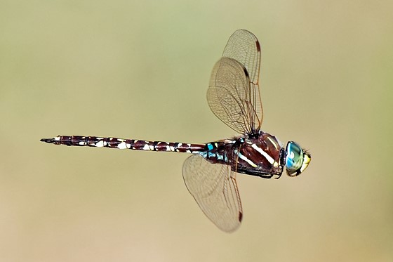 Re: Dragonfly!: Micro Four Thirds Talk Forum: Digital Photography Review
