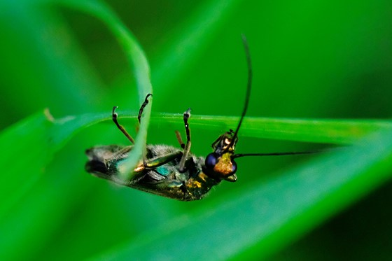 Insect Identification (UK): Nature and Wildlife Photography