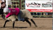 Canon EOS-1D X Mark II: Mutton Busting