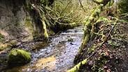 Nikon D5500 creek sample video