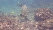 Olympus Tough TG-5 4K underwater sample video