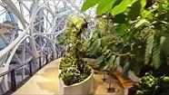 Ricoh's Theta V in the Amazon Biospheres