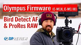 Olympus Firmware Updates: Bird Tracking and ProRes Raw
